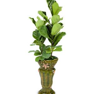 떡갈 고무나무 (특호)